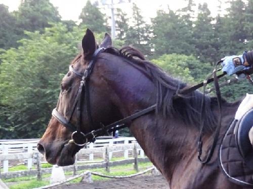 乗馬の様子